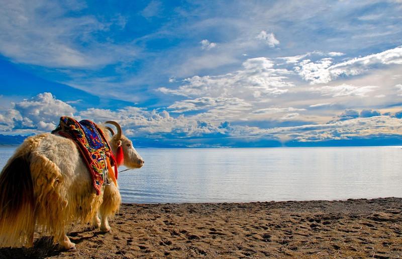 [成都出发]西藏拉萨纳木措双飞4日游